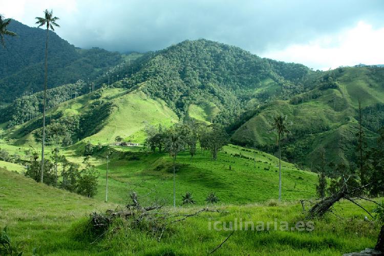 Colombia | Innova Culinaria