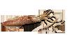 calamar (chipirón)